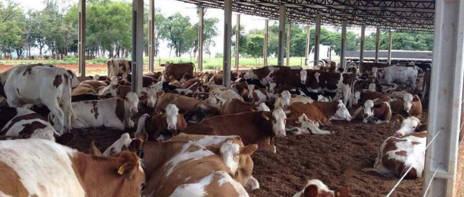 Sistema de Compost Barn da Ouro Branco Agronegócios