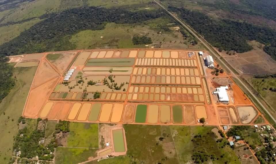 Complexo da Peixes da Amazonia